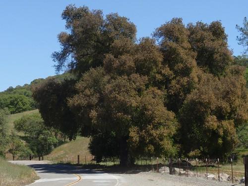 Panoche Road 03
