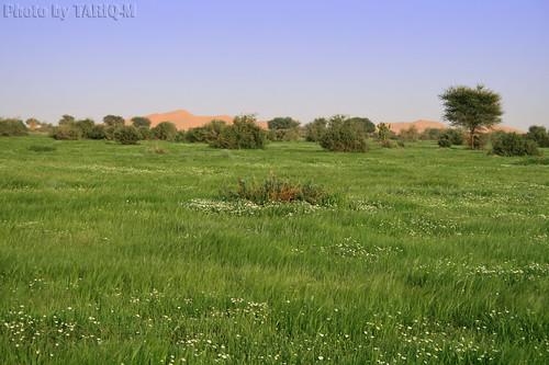 Green Desert  روضة خريم 1432هـ by TARIQ-M