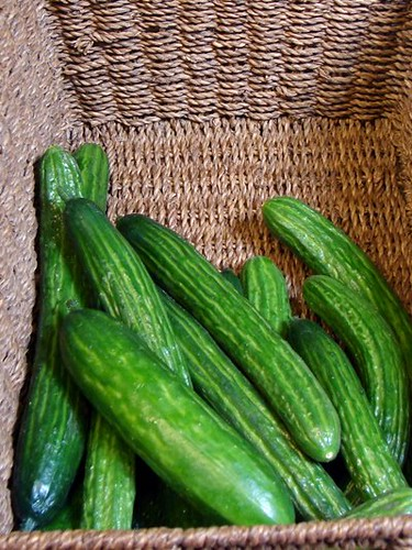 hothouse cukes