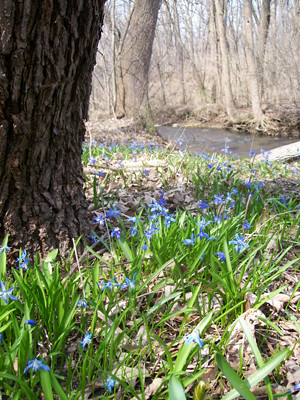 20110410_squill2