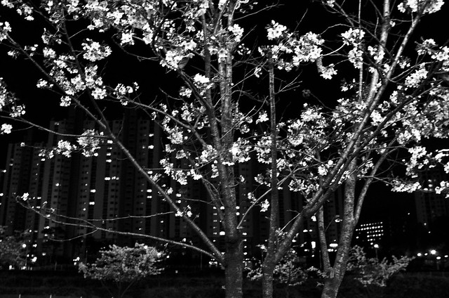 #5- Spring Sprung