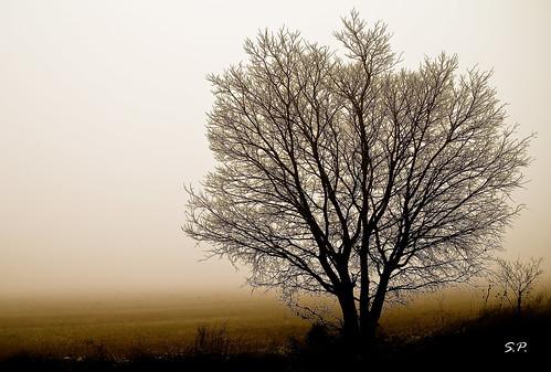Niebla otoñal