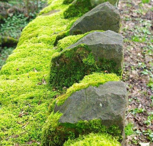 20110227-10_Mossy Stone Wall - St Briavels Castle by gary.hadden