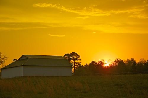 Golden Sunset by MatthewOsbornePhotography