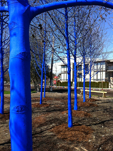 The Blue Trees-5