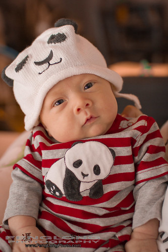 Xiao Xiong Mao - Miles the Little Panda
