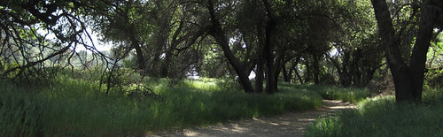 Placerita Canyon Header