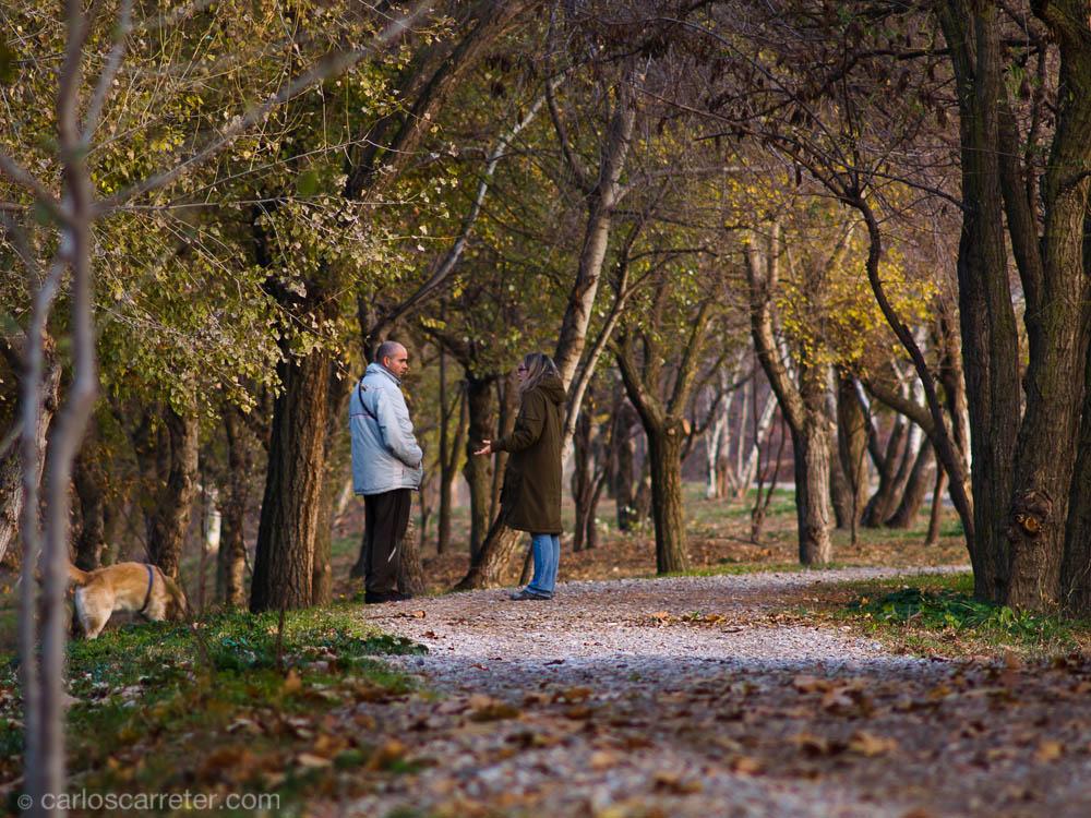 Diálogo entre los árboles