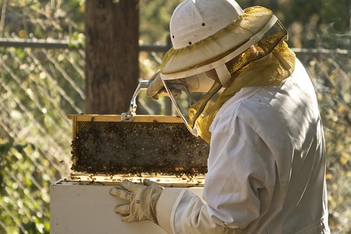 Honey Frames