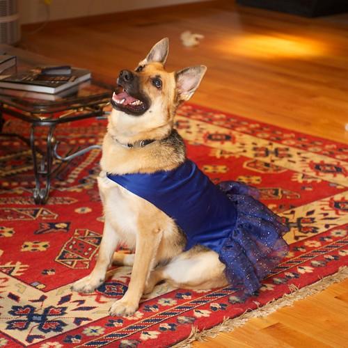 Doggie Hannukah outfit