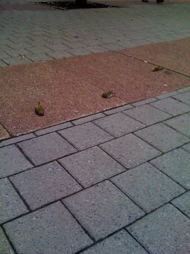 A flock of dead birds
