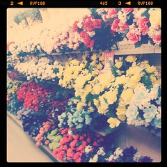 Strolling through a kitschy field of flowers~