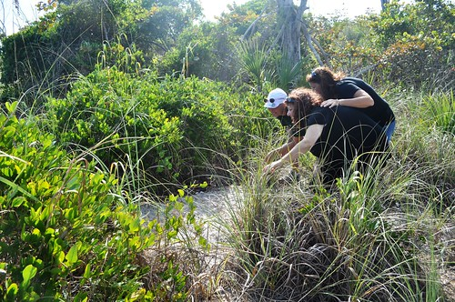Gopher Tortoise Spotting - Missy, Ann, Kelly at Stump Pass Beach State Park, Fla.