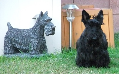 Bailey and scottie statue