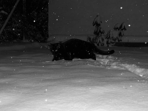 I Can Haz Snow