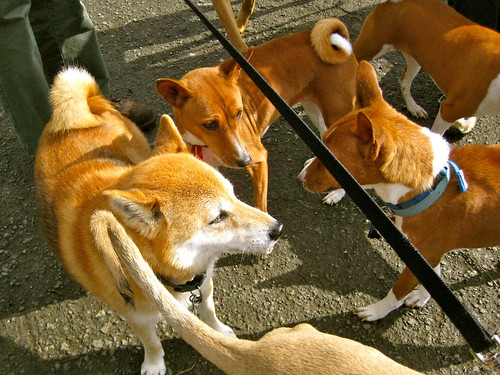 One of these tails is not like the others