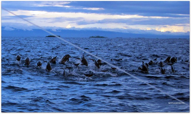 The dolphins of Balicasag Island