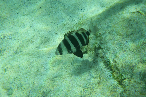 Stripy Fish