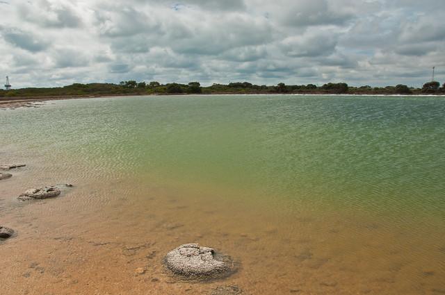 Stromatolite (or thrombolite) at Lake Thetis, Cervantes, Western Australia