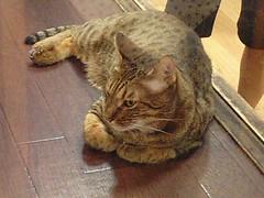 20070806:猫