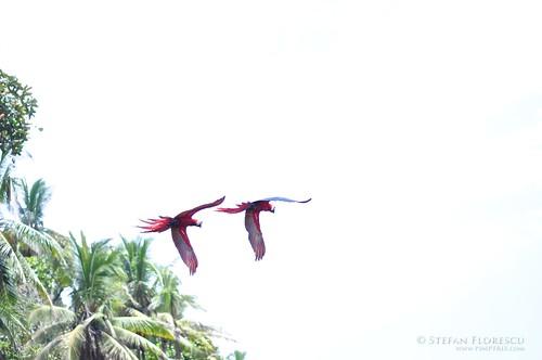 KLR 650 Trip Costa Rica 257