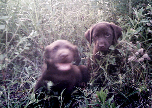 elway puppy