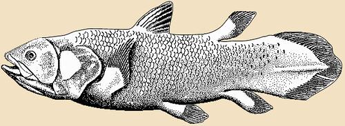 Un celacanto