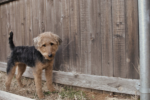 Lizzie by the fence