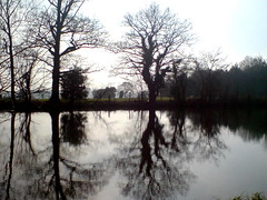 Lake At Totteridge, Mid Feb 2011
