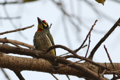 CopperSmith Barbet - 2 Shots