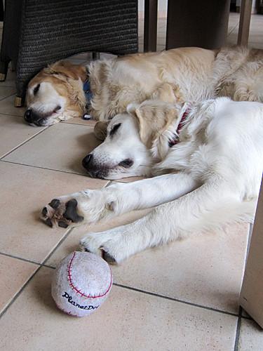 Pals taking a nap (9/52)