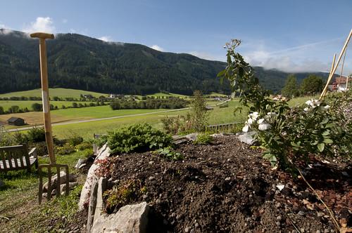 lavori in corso muretti lunghi  rosa moschata