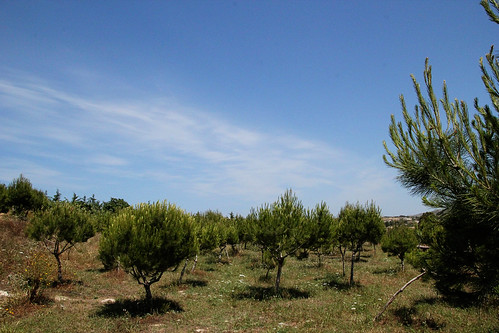 Trees-and-sky