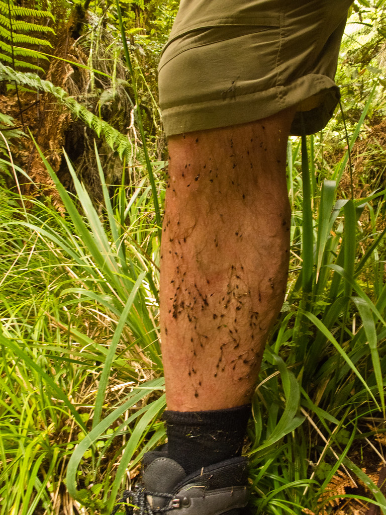 Devil grass seeds on my legs