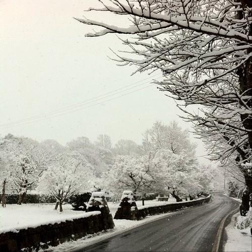 お茶の先生のご自宅前から。今日は雪景色!☃ #snow