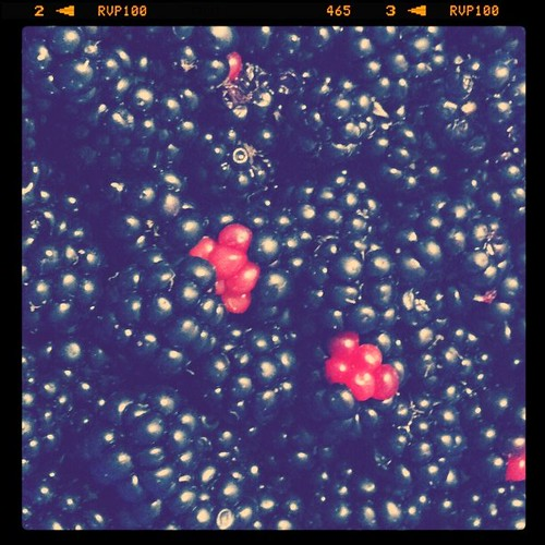 Blackberries fresh from the field