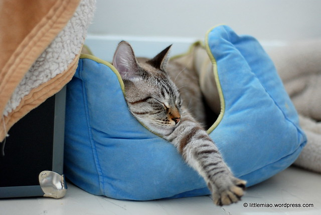 Chun, napping