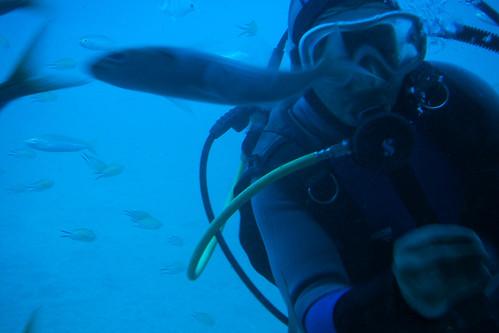 Scuba Diver Feeding The Fish
