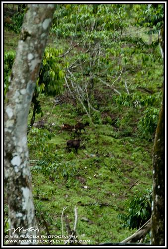 Davao Eden Nature Park 084 copy