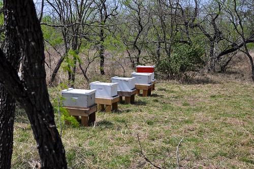 Coyote Bee Yard 1