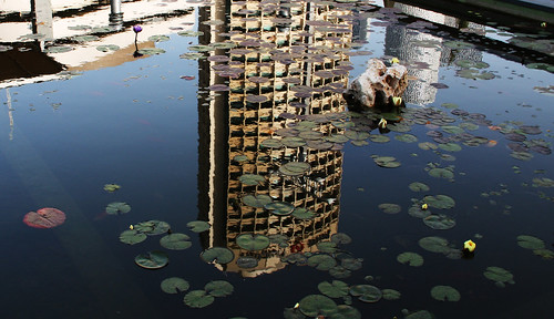 Tel Aviv and Water Lilies