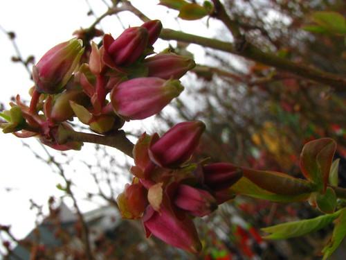 Taste of Spring