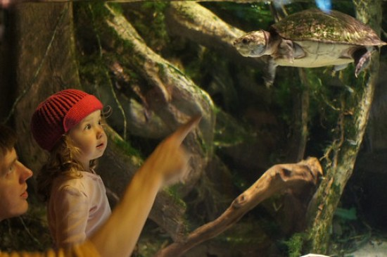 Amazed at the Flying Turtle - Baltimore Aquarium