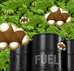 Sustainable Feedstocks for Biofuels, Chemicals