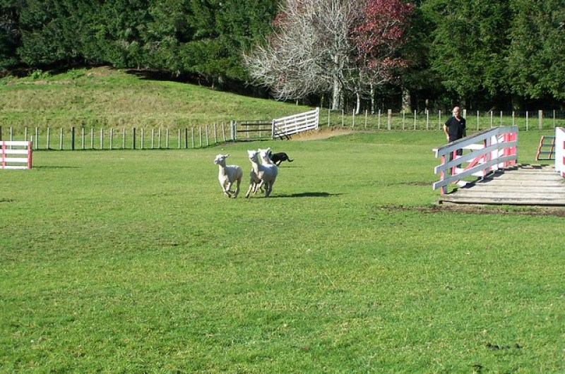 Agrodome sheep farm