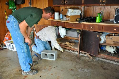 Swarm in Roger's garage