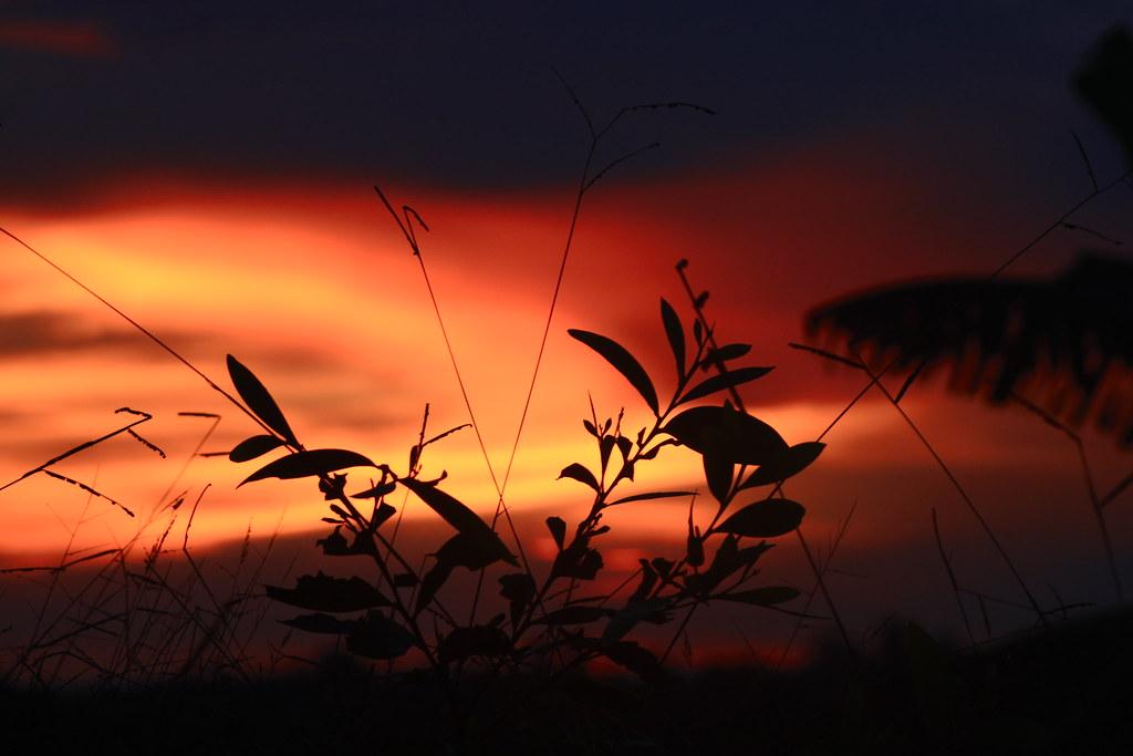 Sariwangi Sunset