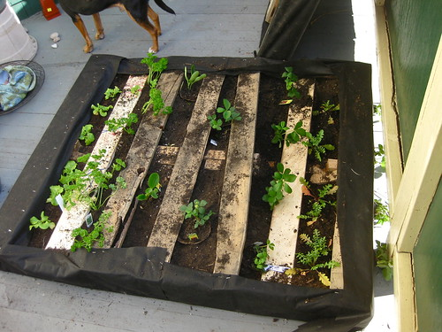 Turning a pallet into a vertical garden