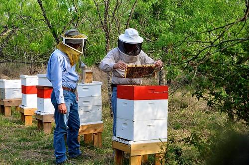 Shawn & Mark check hives