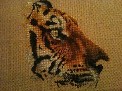 Regal Tiger - 31 May 2011